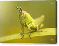 Grasshopper Acrylic Print by Andre Goncalves