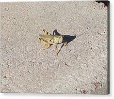 Grasshopper Curiosity Acrylic Print