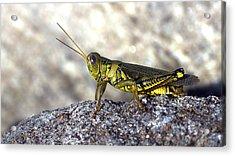 Grasshopper Acrylic Print by Joseph Skompski