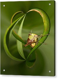 Acrylic Print featuring the photograph Grasshopper by Jouko Lehto