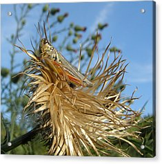 Acrylic Print featuring the photograph Grasshopper On Throne Of Straw by Jeanette Oberholtzer