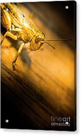 Grasshopper Under Shining Yellow Light Acrylic Print by Jorgo Photography - Wall Art Gallery
