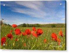 Acrylic Print featuring the photograph Grassland And Red Poppy Flowers by Jean Bernard Roussilhe