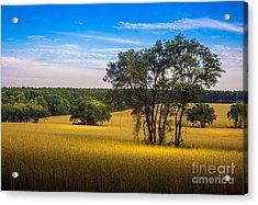 Grassland Safari Acrylic Print by Marvin Spates