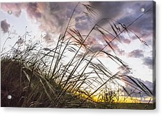 Grassy Knoll Acrylic Print
