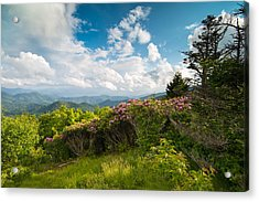 Grassy Ridge Roan Highlands Rhododendrons On The Appalachian Trail Acrylic Print by Rick Dunnuck
