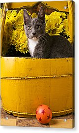 Gray Kitten In Yellow Bucket Acrylic Print by Garry Gay