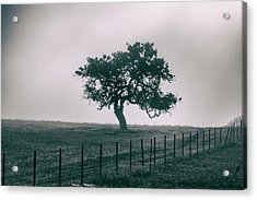 Gray Sky Morning Acrylic Print
