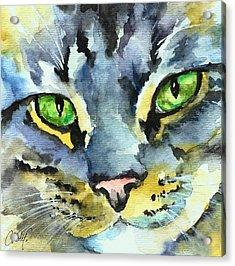 Gray Tabby Striped Cat Acrylic Print by Christy  Freeman