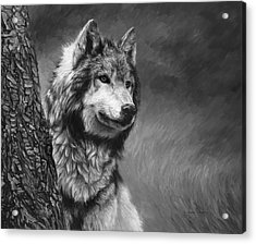 Gray Wolf - Black And White Acrylic Print by Lucie Bilodeau