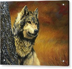 Gray Wolf Acrylic Print by Lucie Bilodeau
