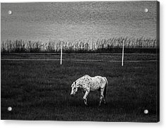 Graze Acrylic Print by Off The Beaten Path Photography - Andrew Alexander