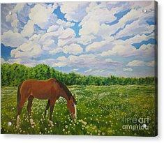Grazing Among The Daisies Acrylic Print by Stella Sherman
