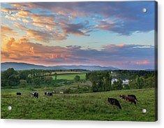 Grazing At Sunset Acrylic Print