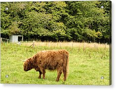 Acrylic Print featuring the photograph Grazing by Christi Kraft