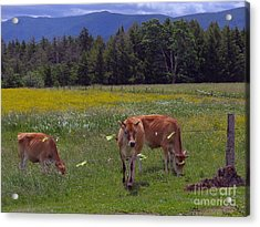 Grazing In The Pasture Acrylic Print by Donna Cavanaugh