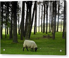 Grazing In The Woods Acrylic Print