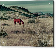 Acrylic Print featuring the photograph Grazing Solo by Charles McKelroy