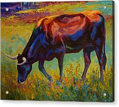 Grazing Texas Longhorn Acrylic Print by Marion Rose