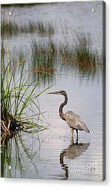 Acrylic Print featuring the photograph Great Blue by Dodie Ulery