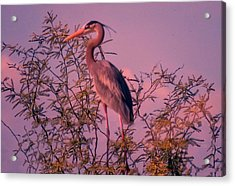 Great Blue Heron - Artistic 6 Acrylic Print