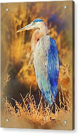 Acrylic Print featuring the photograph Great Blue Heron by Bellesouth Studio