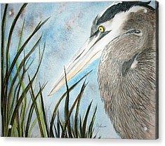Great Blue Heron Acrylic Print by Georgia Johnson
