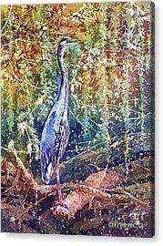 Great Blue Heron Acrylic Print by Hailey E Herrera