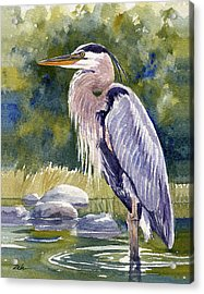 Great Blue Heron In A Stream Acrylic Print