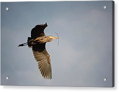 Acrylic Print featuring the photograph Great Blue Heron In Flight by Ann Bridges