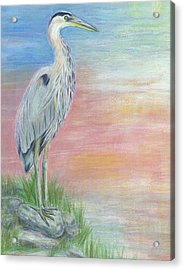 Great Blue Heron  Acrylic Print by Jeanne Kay Juhos