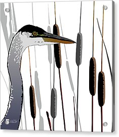 Great Blue Heron - Light Background Acrylic Print