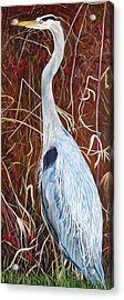 Great Blue Heron Acrylic Print by Marilyn  McNish