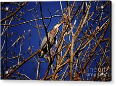 Acrylic Print featuring the photograph Great Blue Heron Nesting 2017 - 1 by Terry Elniski
