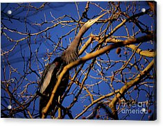 Acrylic Print featuring the photograph Great Blue Heron Nesting 2017 - 3 by Terry Elniski