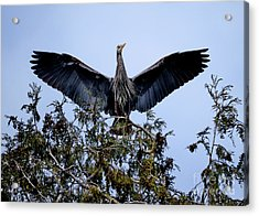 Acrylic Print featuring the photograph Great Blue Heron Nesting 2017 - 7 by Terry Elniski