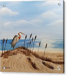 Great Blue Heron - Outer Banks Acrylic Print