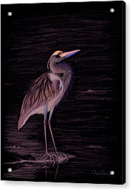 Great Blue Heron Acrylic Print by Phyllis Howard