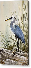 Great Blue Heron Shore Acrylic Print by James Williamson