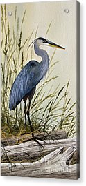 Great Blue Heron Splendor Acrylic Print