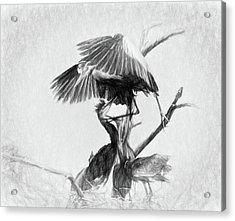 Great Blues II Sketch Acrylic Print