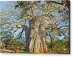 Great Boabab Tree Acrylic Print