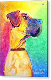 Great Dane - Rapture Acrylic Print by Alicia VanNoy Call