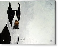 Great Dane Acrylic Print by Dick Larsen