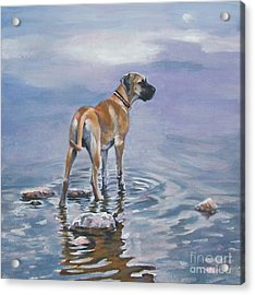 Great Dane Acrylic Print by Lee Ann Shepard