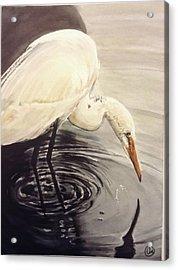 Great Egret , Mirror Acrylic Print