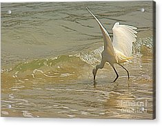 Acrylic Print featuring the photograph Great Egret 2 by Nicola Fiscarelli