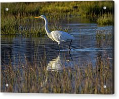 Great Egret, Ardea Alba, In A Pond Acrylic Print