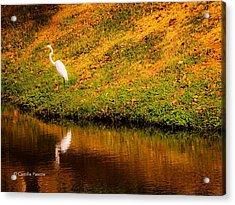 Great Egret At The Lake Acrylic Print
