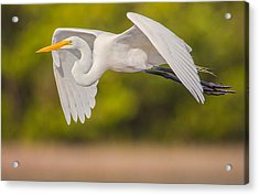 Great Egret Folded Wings Acrylic Print